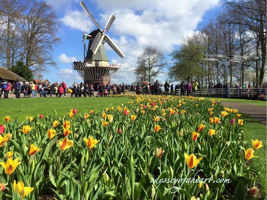 featured-keukenhof
